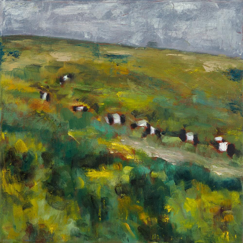 Dartmoor Herd