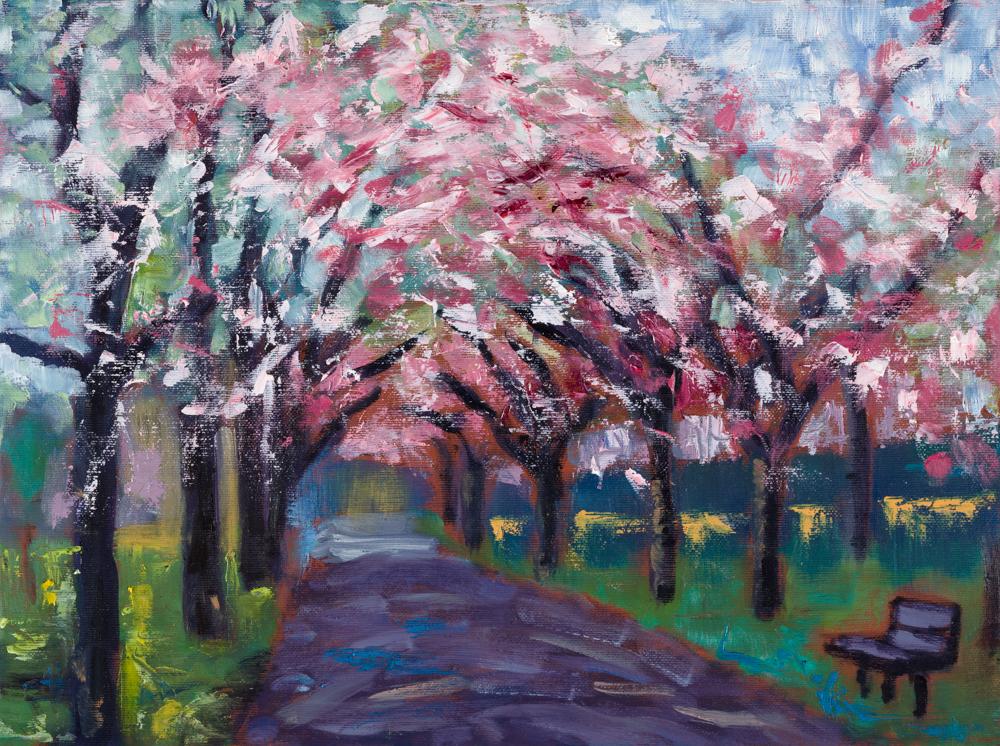 Spring cherry tree avenue